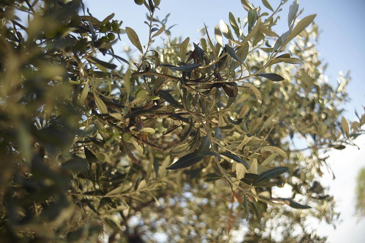 Le tappe più curiose di un viaggio in Puglia